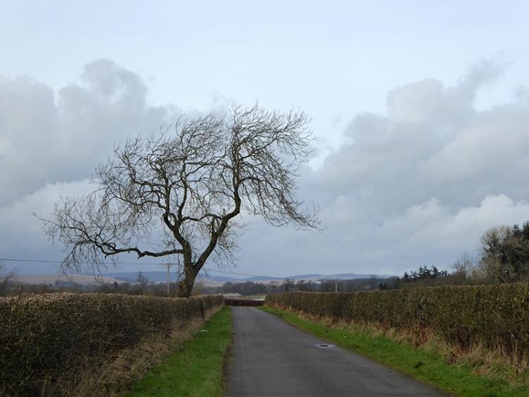 Sark tree