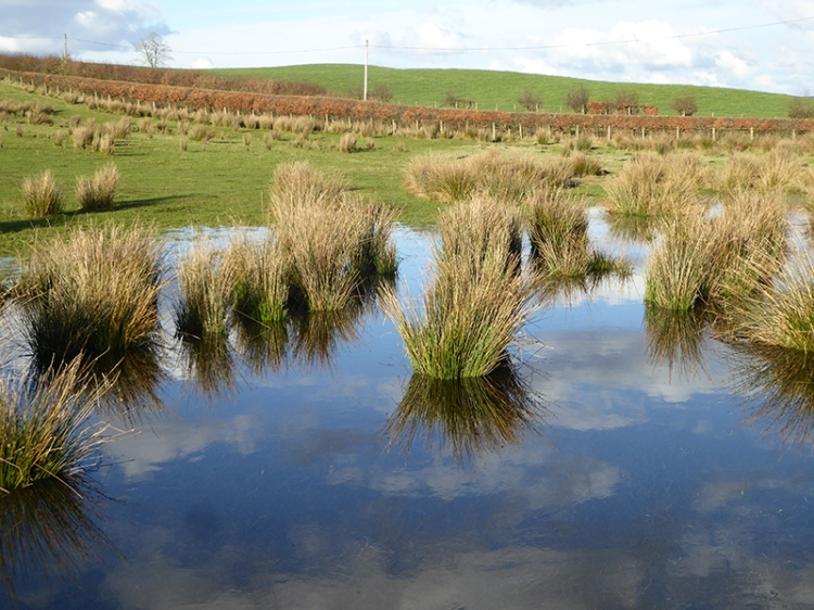 puddle near Raehills