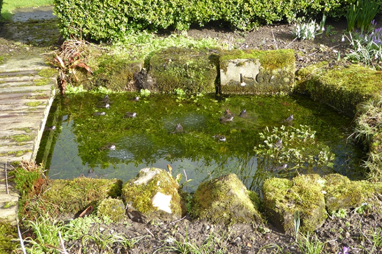 pond with frogs