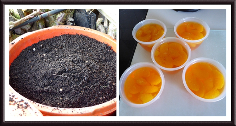 compost and jelly