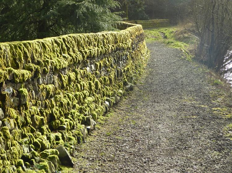 mossy wall at park