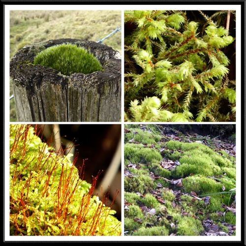 Moss on gaskells