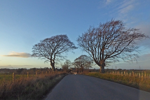 Rockliffe road trees
