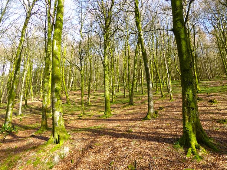 Longfauld wood