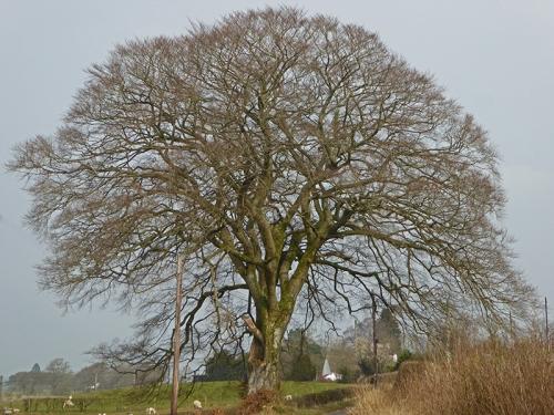 Castlemilk tree