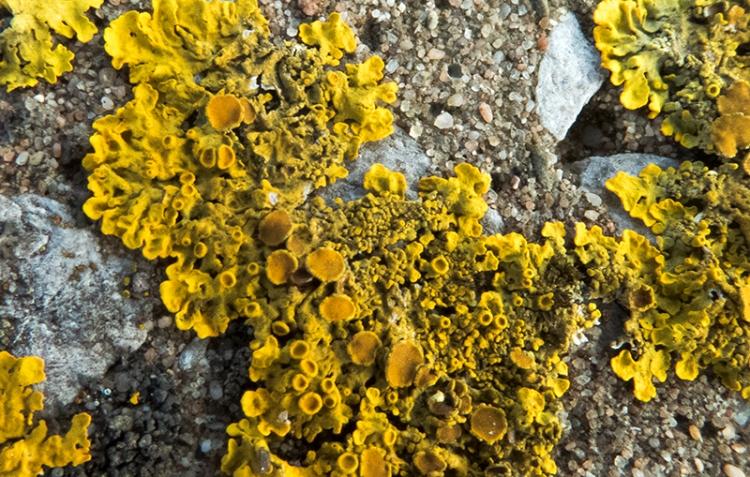 concrete lichen