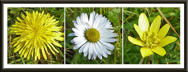 ecclefechan wildflowers