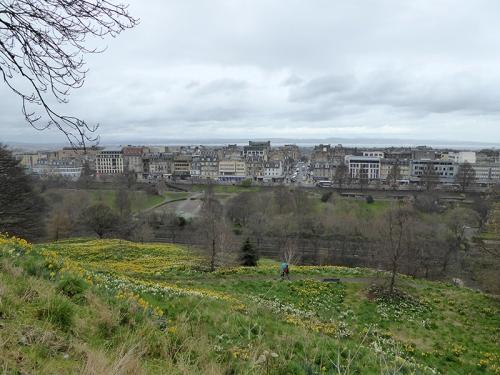 Castle daffodils