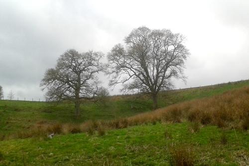 Irvine House trees