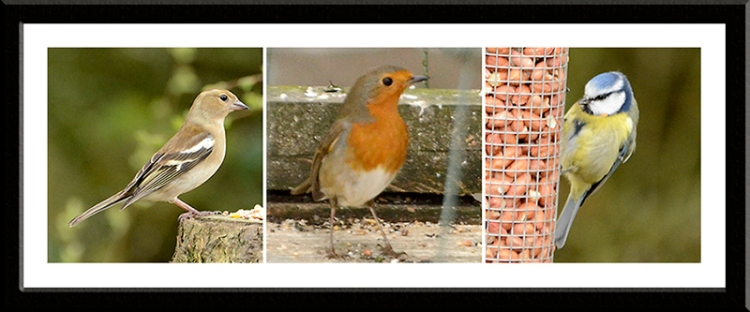 chaffinch, blue tit and robin