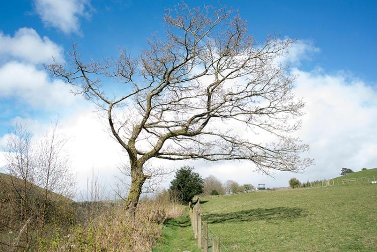 Lamb Hill path