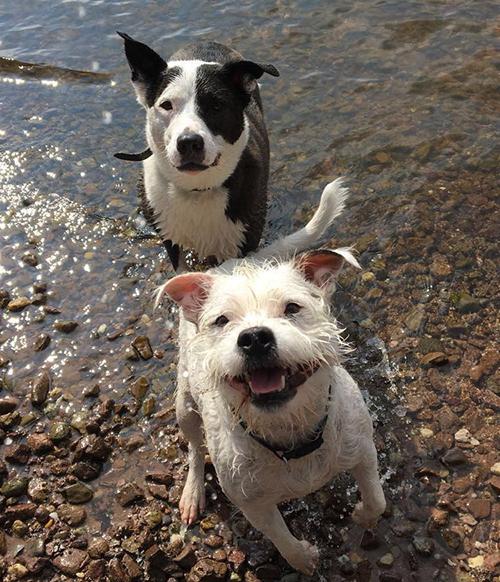 Tony's dogs