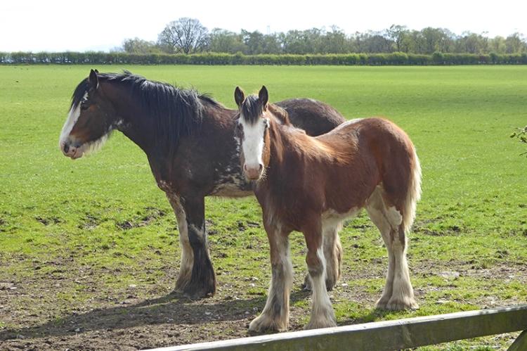 Todhills horses