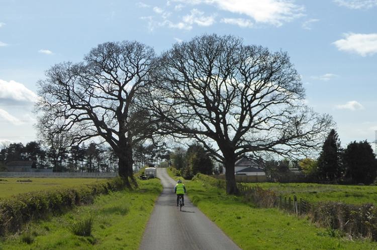 Bridge of trees at Todhills