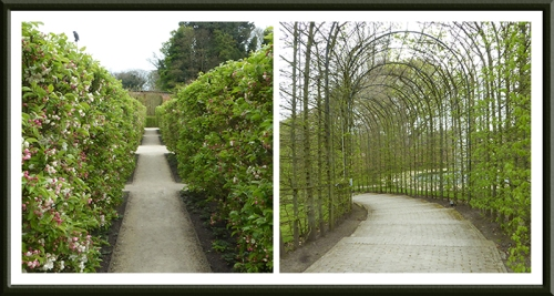 alnwick garden hedge