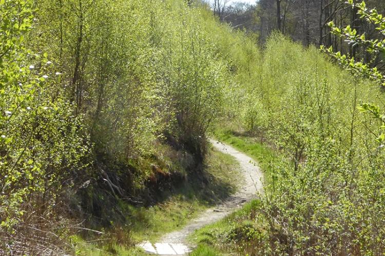 Gaskells in spring