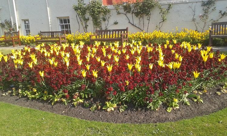 North Berwick flower bed