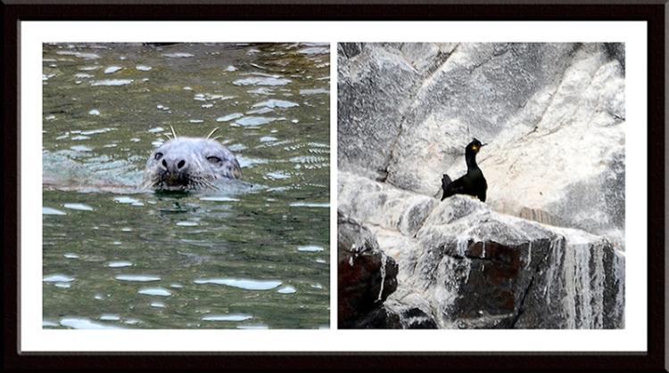 seal and shag