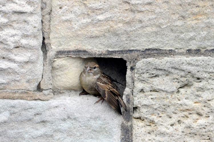 sparrow in Liz's wall