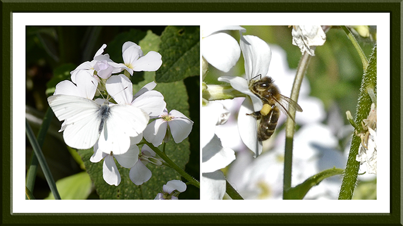 small white butterfly and bee
