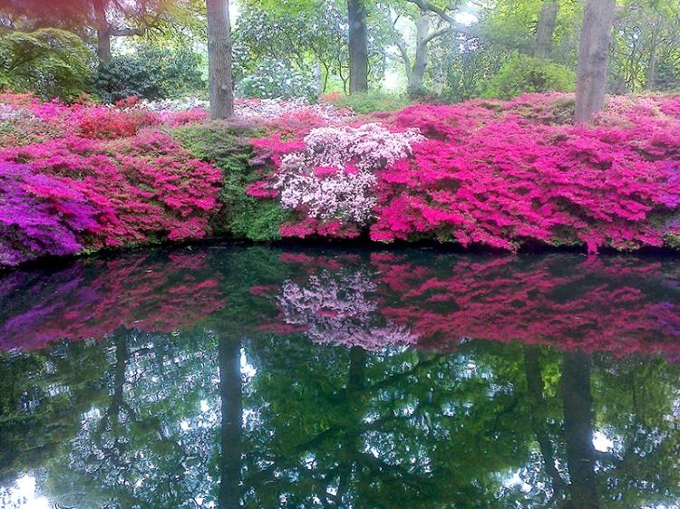 Isabella Plantation, Richmond Park 29.04.17