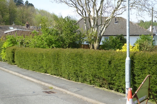 road hedge