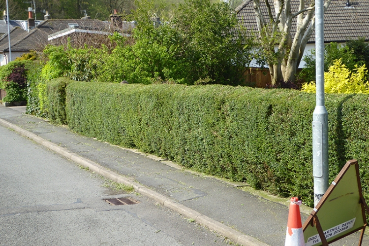 road hedge