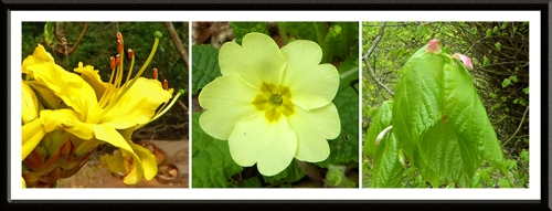 azalea, primrose and leaf