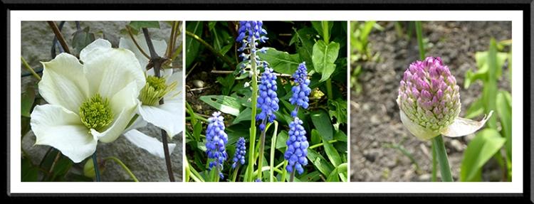 strawberry, hyacinth and allium