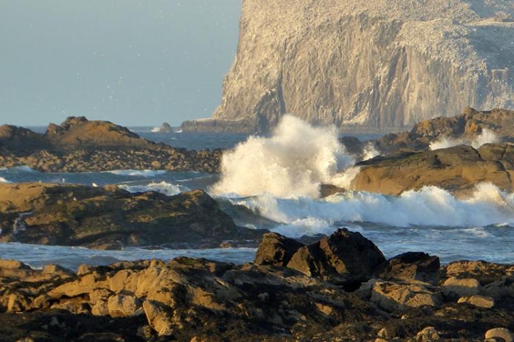 waves North Berwick