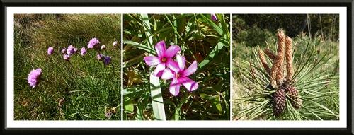Glen bay wild flowers