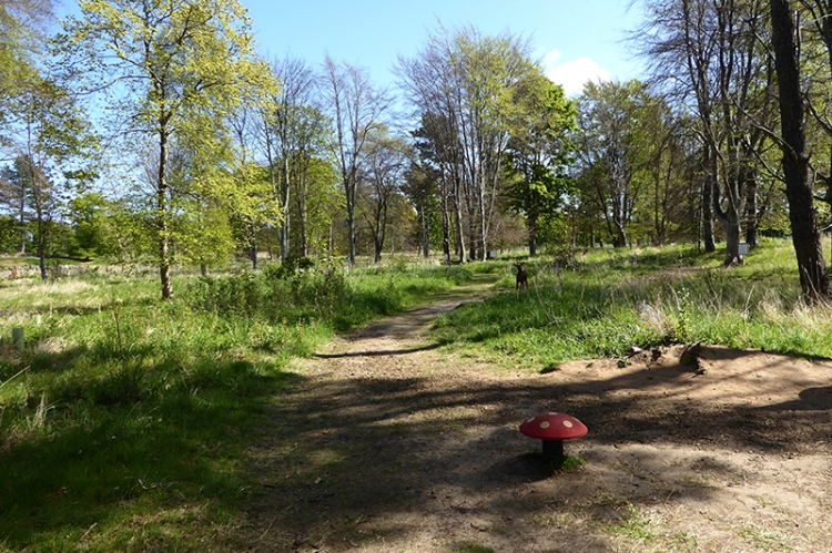 Fairy Walk Archerfield