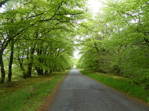 road to Boreland