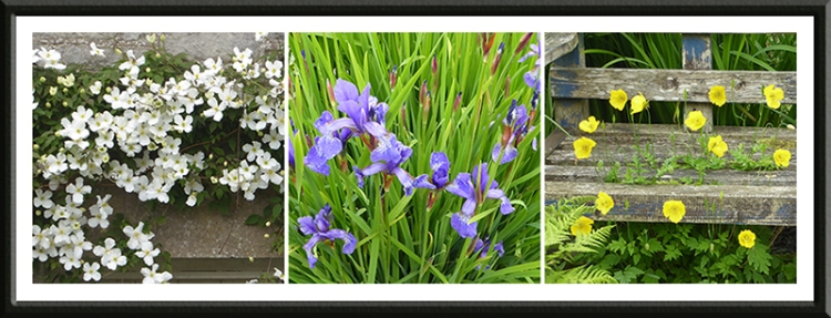 clematis, iris and welsh poppy