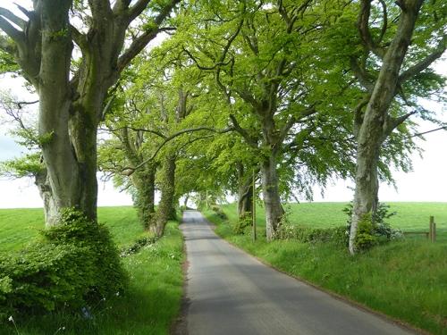 near Middlebie
