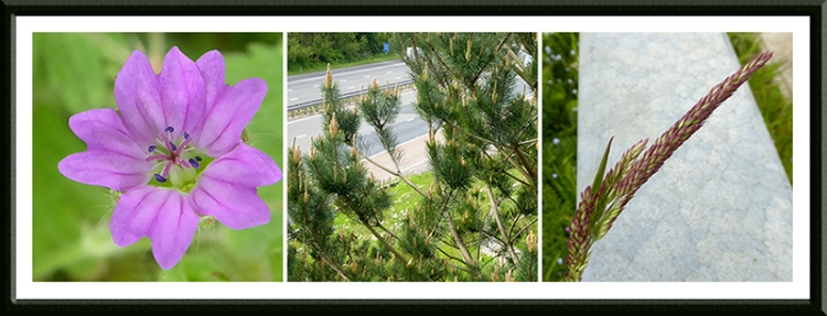 Gretna plants