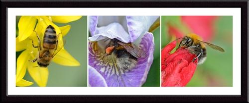 allium, iris and weigela