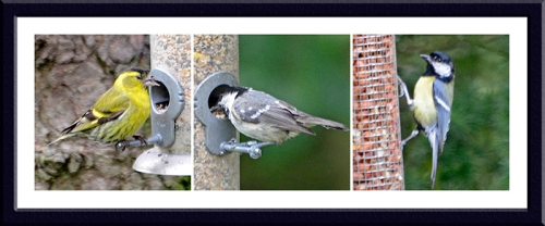 siskin, coal tit and great tit