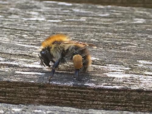 London bee
