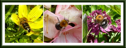 tree bumble bees