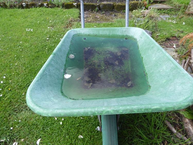wheelbarrow with rain