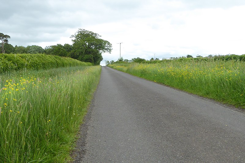 sprinkell road with buttercups