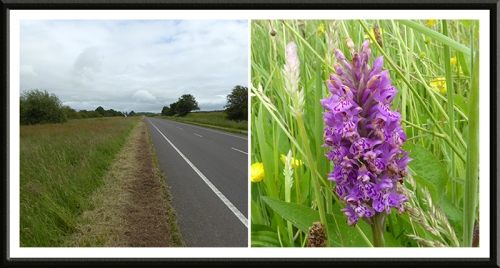 A74 and orchid