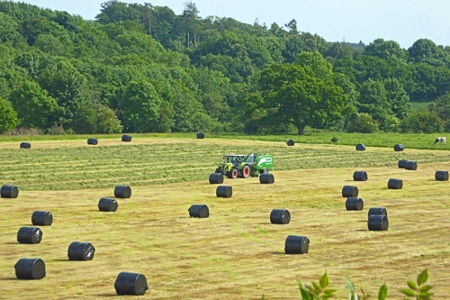 baling the silage Canonbie