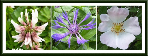 Meikleholm flowers