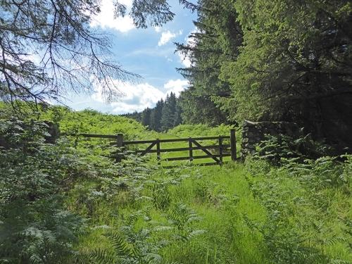 Gate beside wauchope