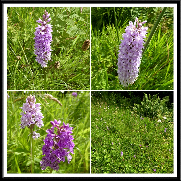 canonbie by pass orchids