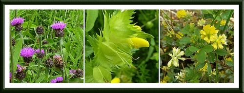 Auchenrivock flowers