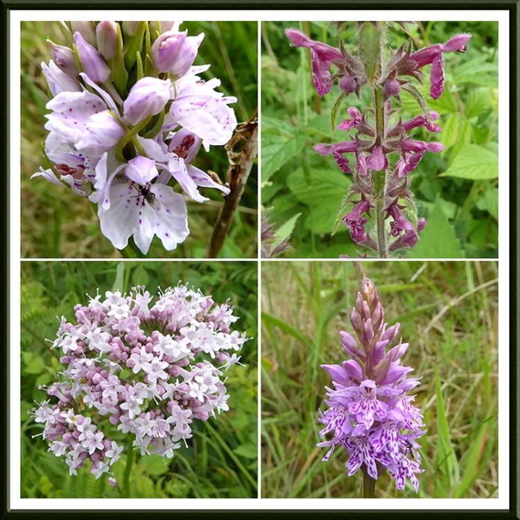 wauchope roadside wild flowers