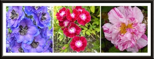 delphinium, sweet william and Rosa Mundi